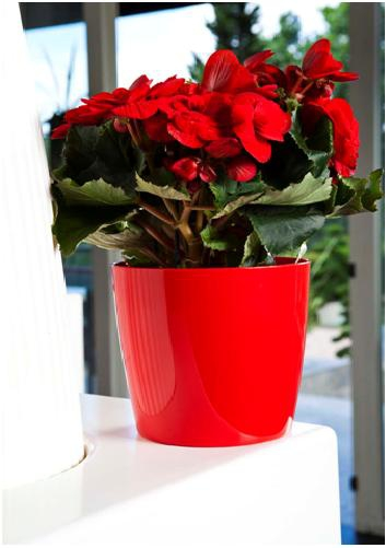 Cubre macetas Poinsettia